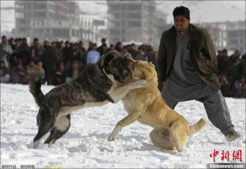 سگ بازی
